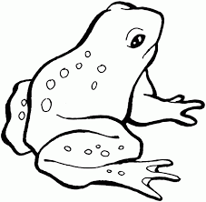 frog pictures kids kids coloring