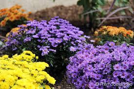 Home Depot Flower Projects - plant support garden center the home depot