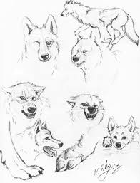 28 realistic wolf coloring pages pics photos realistic wolf