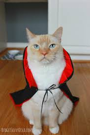 Pet Cat Halloween Costumes Easy Halloween Costume For Cat Budget Savvy Diva