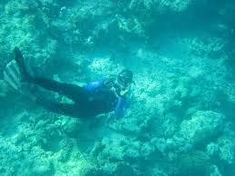 Utah snorkeling images Snorkeling with one ocean matemwe beach zanzibar tanzania jpg
