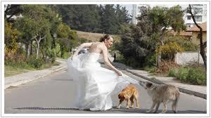 trash the dress extreme trash the dress a must see gardner hamilton wedding