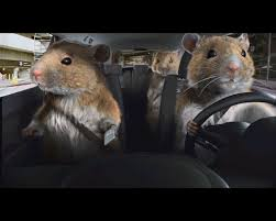 driving hamster funny car photos pinterest kia soul funny
