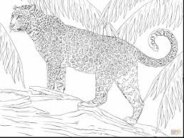 extraordinary jaguar big cat coloring page with jaguar coloring