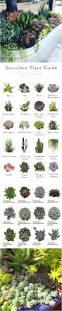 Succulent Plant Succulent Plant Guide Clipboards