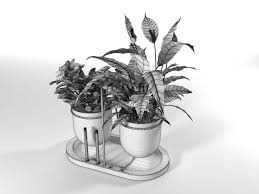 Peace Lily 3d Model Peace Lily With Camellia Cgtrader