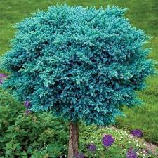 ornamental trees manufacturer from pune