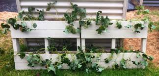 Strawberry Garden Beds Living In The Land Of Oz Strawberry Pallet Garden Easter Weekend