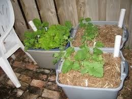 Self Watering Self Watering Garden Containers Gardening Ideas