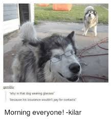 Dog With Glasses Meme - 25 best memes about dog wearing glasses dog wearing glasses memes