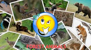 animals for kids planet earth animal sounds photo android apps