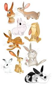 110 best rabbits images on pinterest drawings animal