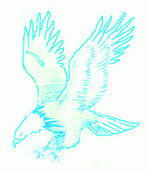 exam guide online how to draw a bald eagle