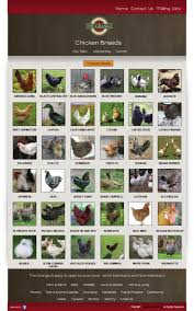 Backyard Chicken Breeds by Chicken Breeds And Their Eggs With New To Backyard Chickens