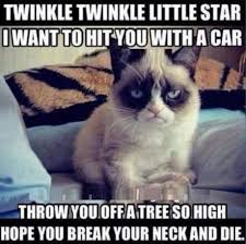 Funniest Cat Memes - 8 of the funniest cats memes every cat owner can relate to