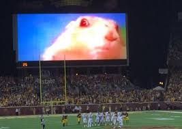 Dramatic Squirrel Meme - minnesota using dramatic squirrel to distract opposing kickers