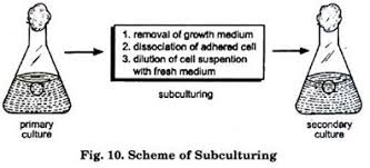 Cell Culture Essay Question   Essay Essay Essay On Plant Tissue Culture History Methods And
