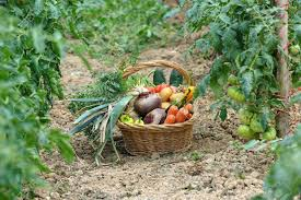 5 palpable benefits of vegetable gardening