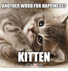 Happy Kitten Meme - 25 best memes about another word for happy another word for