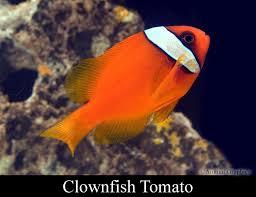fish mart inc