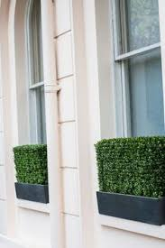 Metal Window Boxes For Plants - window boxes can also be fixed to walls indoors as well as out