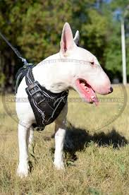 hand painted leather bull terrier harness for agitation training