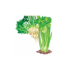 all about growing celery organic gardening mother earth news