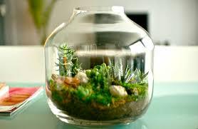 amazing of inspiring indoor garden design with pond have 6025