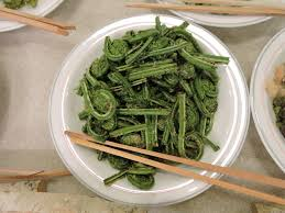 which food plant was native to the old world feast from the forest foraging for edible plants in japan the