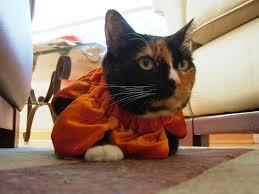Cat Halloween Costumes Cats Pixie Halloween Costume Cat Halloween Costume