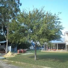 native plant nurseries perth coastal trees tree nursery western australia mature trees