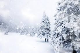 snowy christmas pictures christmas background with snowy firs stock photo melis82 33816641