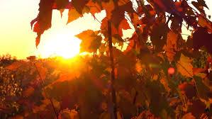 close dof fall foliage colored vibrant autumnal colors