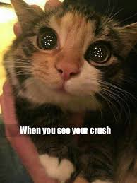 Cute Kitty Memes - funny memes today 6 when see your crush is coming