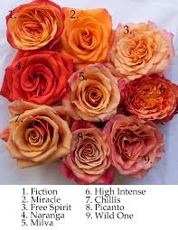 orange roses the orange study flirty fleurs the florist