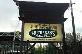 native plants texas buchanan u0027s native plants cultivate houston