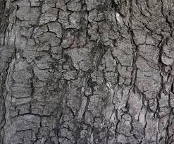 grey tree bark texture