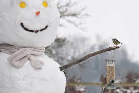 protect winter bird feeders how to feed winter birds