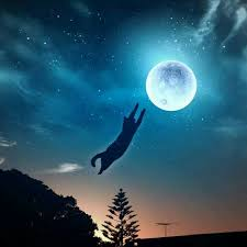 164 best moon cats images on cat cats and cat