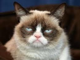 Make Your Own Cat Meme - grumpy cat memesr