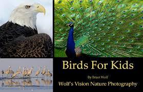 birds for kids jpg