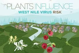 invasive non native plants in your landscape plants can alter west nile virus risk