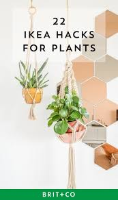 88 best greenery images on pinterest plants gardening and