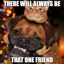 Cats Memes - dogs an cats imgflip