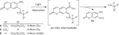 ncm a photolabile group for preparation of caged molecules