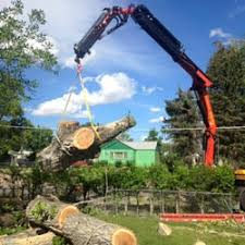 rocky mountain tree care specialists tree services great falls