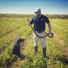 tribesmen dogs key in florida u0027s python control cbs miami