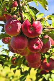 fruit tree service pest patrol