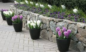 Small Garden Plants Ideas 8 Small Garden Ideas To Hold Entertaining Gardening