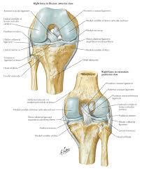 Anatomy Of The Knee Full Function Rehab Knee Injury Acl Meniscus Tear Blog